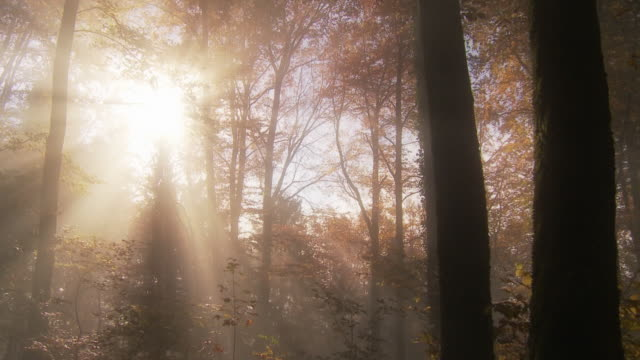 light rays in fall forest