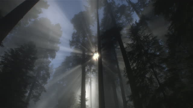 light rays in forest, redwood national park, california - atmospheric mood stock videos & royalty-free footage
