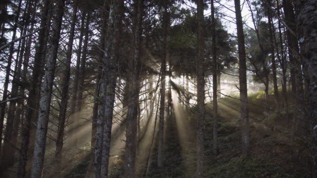 Light rays through trees