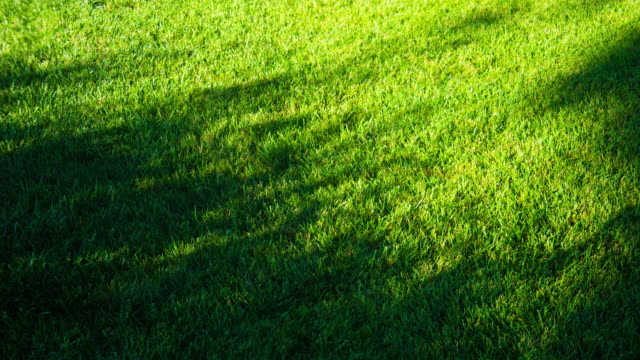 light shade motion on green grassland 4k dci - shade stock videos & royalty-free footage