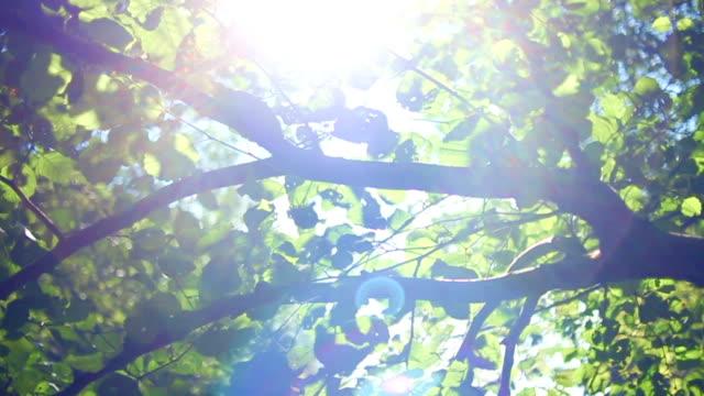 Light shimmering through the leaves. Tilting up
