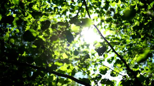 Light shimmering through the leaves