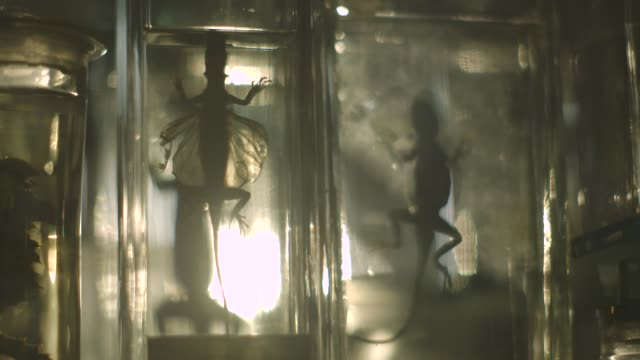light shine through jars containing preserved newts - museum stock videos & royalty-free footage
