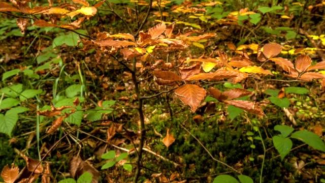 vídeos de stock, filmes e b-roll de luz que brilha na floresta do outono. luz solar que brilha brilhante em uma floresta luxúria do outono coberta na folha verde. - estampa de folha