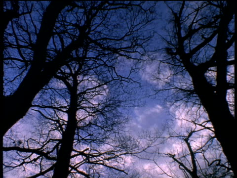 light wispy clouds move above silhouetted bare trees - wispy stock videos & royalty-free footage