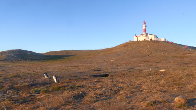 vídeos de stock, filmes e b-roll de lighthouse and magellan penguins in magdalena island - passear sem destino