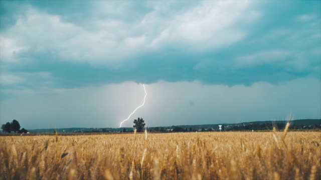 slo mo lightning struck across the sky over a field of wheat - lightning stock videos & royalty-free footage