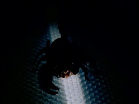 vídeos de stock e filmes b-roll de lights come up on emperor scorpion - porta amostra