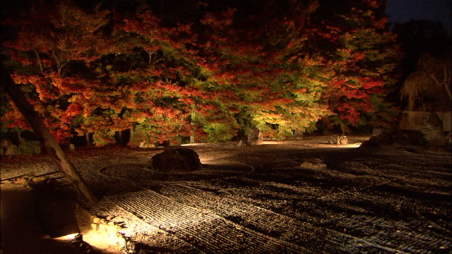 lights illuminate trees planed amidst a gravel and rock garden. jisso-in temple - kyoto stock videos and b-roll footage