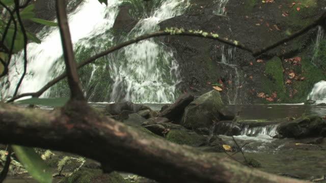 vídeos de stock, filmes e b-roll de lil cachoeira de 128 30f em - tronco parte de planta