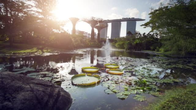 ws lilly pads in a lake with marina bay sands and super trees in back ground. - stagno acqua stagnante video stock e b–roll