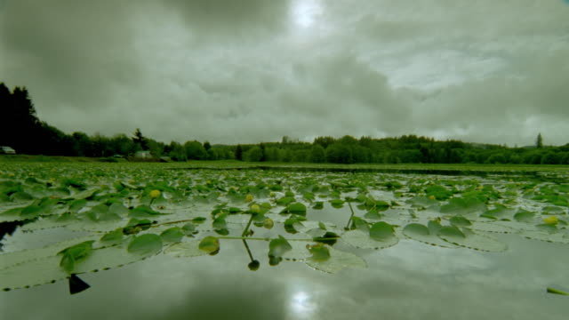 Lily pad covered lake with swirling storm clouds above + reflected in water / Oregon