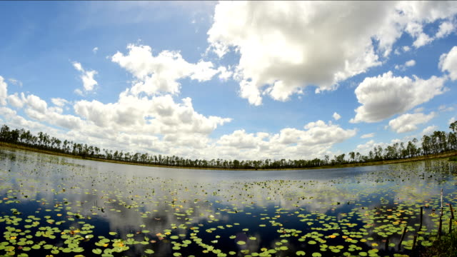 lily pad-covered forest lake with clouds moving away from camera - lily stock videos & royalty-free footage