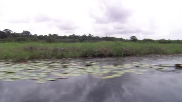 vídeos de stock, filmes e b-roll de lily pads float along the shore of a scenic river. - territórios ultramarinos franceses