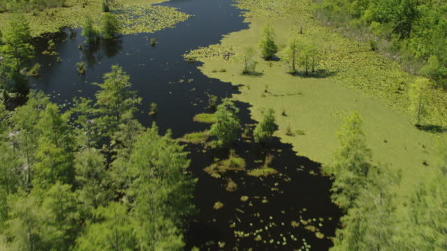 ws tu aerial pov lily pads in swamp at francis marion national forest / berkeley county, south carolina, united states - south carolina stock videos & royalty-free footage