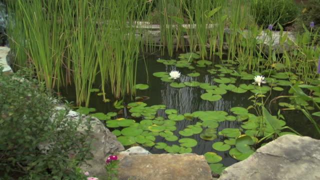 vidéos et rushes de lily pond dolly plan large - dépression terrestre