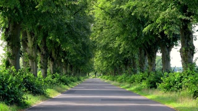 lime tree alley in summer, brandenburg, germany - brandenburg state stock videos & royalty-free footage