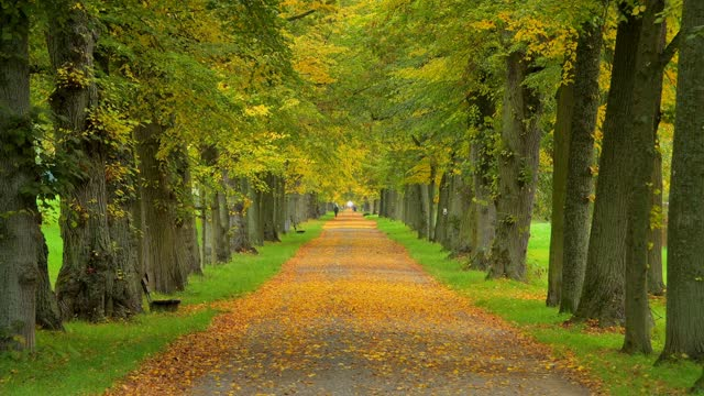 lime tree avenue in autumn - avenue stock videos & royalty-free footage