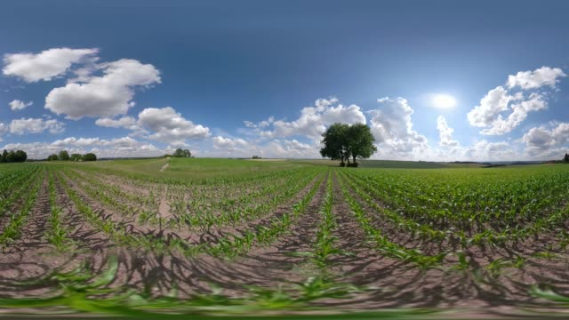 360 vr / lime tree on field - 360 video stock videos & royalty-free footage