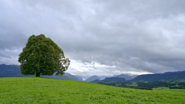 lime tree on hill, allgau, bavaria, germany - anhöhe stock-videos und b-roll-filmmaterial