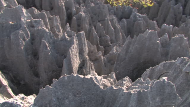 CU, HA, PAN, Limestone rock formations in Tsingy De Bemarha National Park, Madagascar