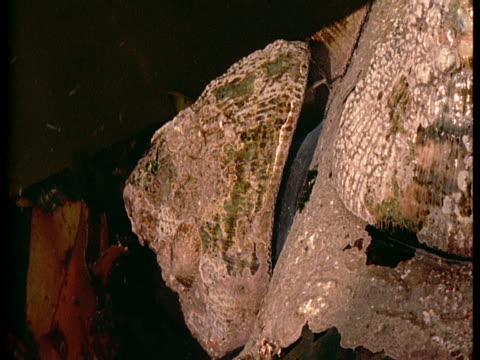 vídeos de stock, filmes e b-roll de a limpet is submerged in a tidal pool. - gastrópode