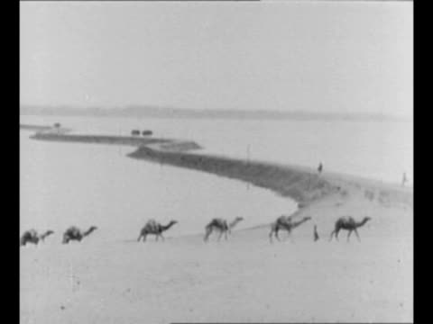 vidéos et rushes de line of camels walks across egyptian desert / montage archaeological encampment at the pyramids of giza / from greatest headlines of the century... - archéologie