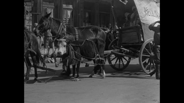 Line of covered wagons moving though town with crowd on either side of street / grizzled man on back of donkey with another one loaded with junk /...