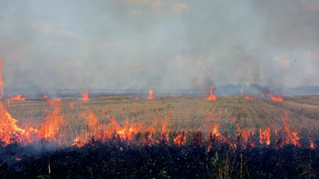 line of fire at burning field - air pollution stock videos & royalty-free footage