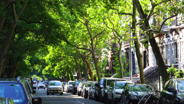 line of fresh green trees surround the street at upper west manhattan new york. - cars parked in a row stock videos & royalty-free footage