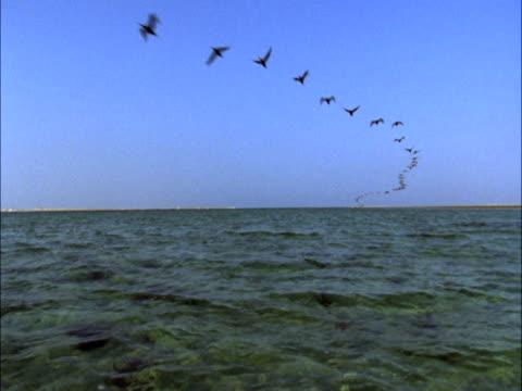 line of socotra cormorants (phalacrocorax nigrogularis) fly over camera, bahrain - flock of birds stock videos & royalty-free footage