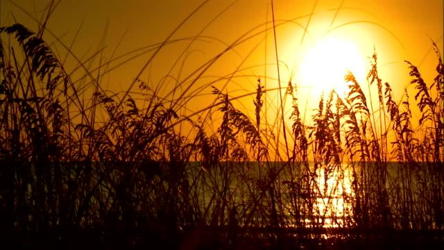 line of tall sea oats in silhouette w/ water, white hot sun bg, silhouette of upper torso of person walking through frame below on beach. protected,... - torso bildbanksvideor och videomaterial från bakom kulisserna