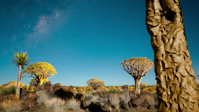 Linear and pan timelapse of a Quiver Tree forest at night against a starry sky in a moonlit landscape as the moon sets with the Milky Way and shadows passing through