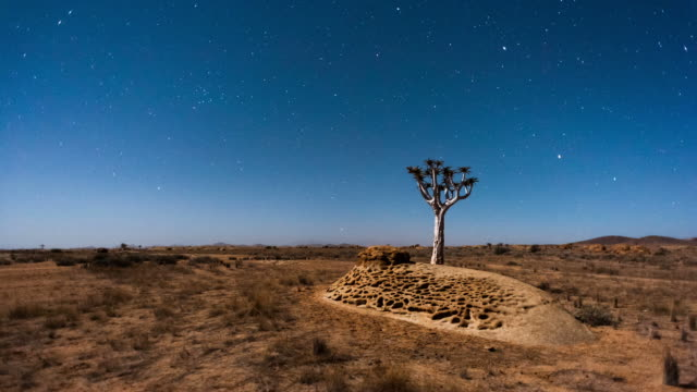 Linear and pan timelapse of a silhouetted Quiver Tree at sunset against a starry night sky as the moon rises over the landscape