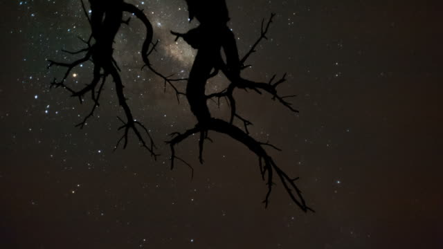 vidéos et rushes de linear, pan and tilt timelapse shot from a low angle shooting up towards a dead acacia tree, silhouetted against the african night sky with the milky way moving through - mort concepts