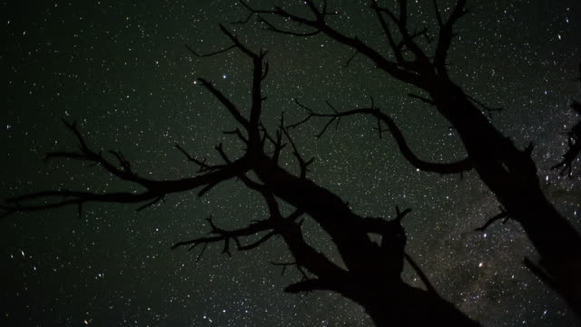 linear, pan and tilt timelapse shot from a low angle shooting up towards a dead acacia tree, silhouetted against the african night sky with the milky way moving into the shot - acacia tree stock videos & royalty-free footage