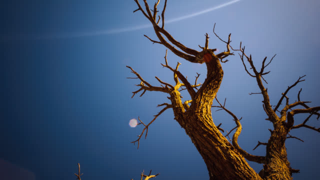 linearpan and tilt timelapse of dead abstract acacia tree against a blue sky with texture and sun flarerotating - textured effect stock videos & royalty-free footage