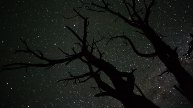 linearpan and tilt timelapse shot from a low angle shooting up towards a dead acacia treesilhouetted against the african night sky with the milky way... - abstract stock videos & royalty-free footage