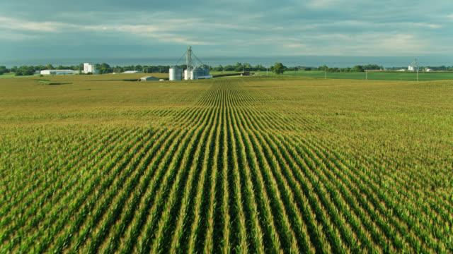 lines of corn on ohio farm - drone shot - ohio stock videos & royalty-free footage