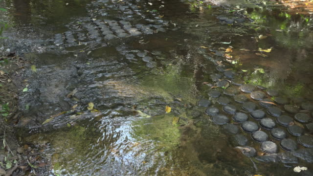 TU / Lingas carved in riverbed in River of a thousand lingas, Kbal Spean