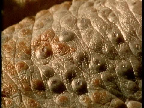 lingual salt glands of crocodile secrete liquid. - lubrication stock videos & royalty-free footage