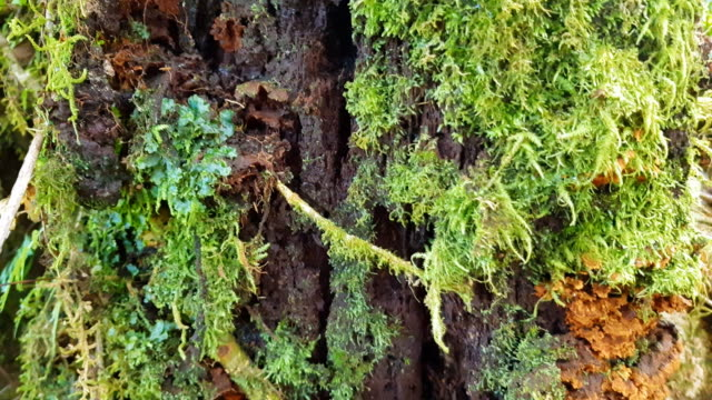 lingzhi mushroom herb and food in moss forest - chinese herbal medicine stock videos and b-roll footage