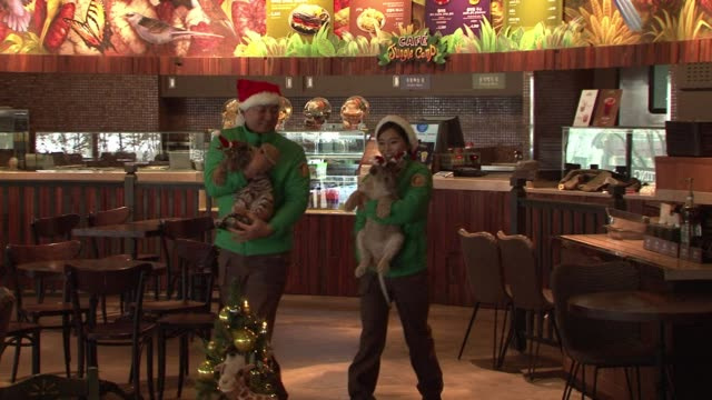 a lion and a tiger cub are dressed up in santa claus hats in a south korean amusement park a festive event likely to provoke anger from animal rights... - huvudbonad bildbanksvideor och videomaterial från bakom kulisserna