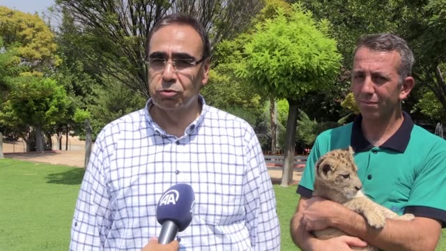 Lion cub named 'Cesur' or 'Brave' in English which was found in a car during traffic control in Cizre district of Sirnak province plays at the...