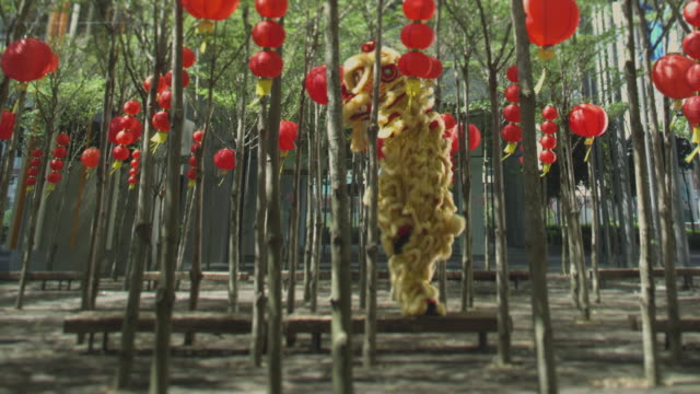 lion dance amongst trees - animal imitation stock videos and b-roll footage