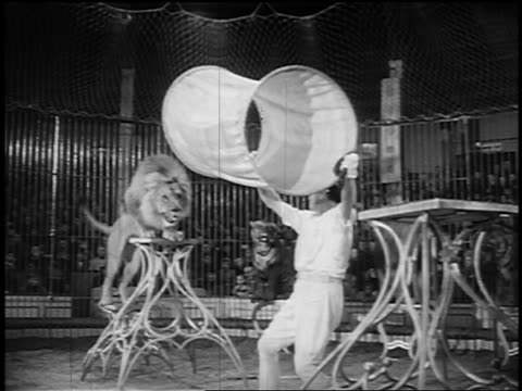 b/w 1955 lion jumping thru cloth tube being held by trainer in circus - circus stock videos & royalty-free footage