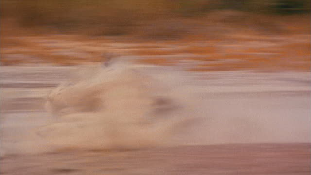 vídeos de stock, filmes e b-roll de a lion kills a gazelle. - matando