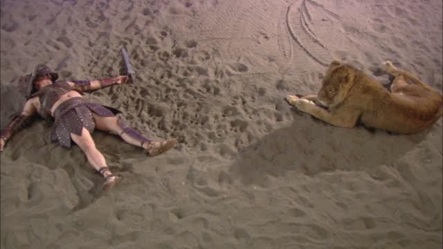 vídeos y material grabado en eventos de stock de a lion rests on sand near a dead gladiator. - gladiador