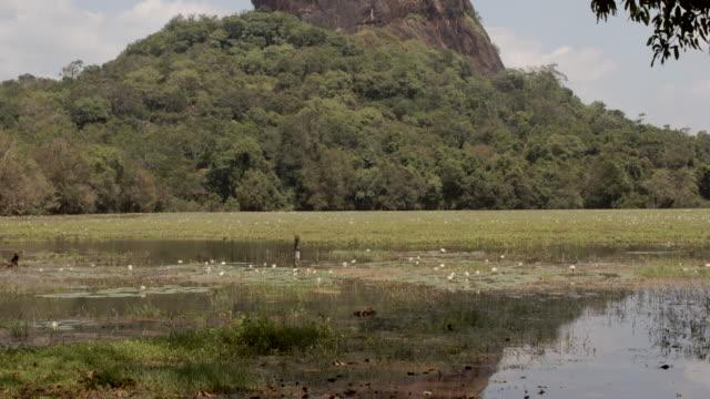 vidéos et rushes de lion rock / sigiriya, sri lanka - culture sri lankaise