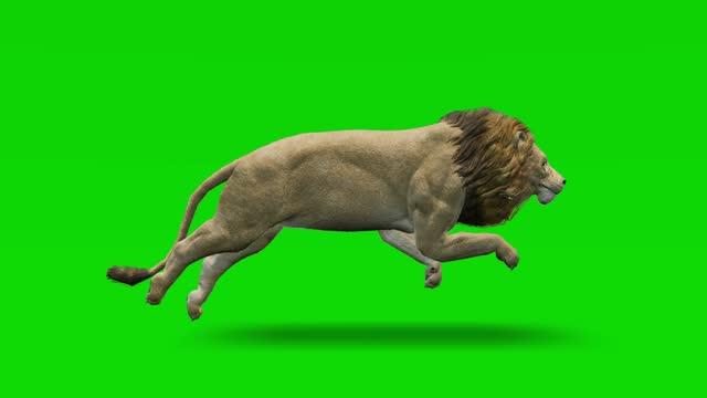 緑色のスクリーンでアニメーションを実行するライオン。動物、野生動物、ゲーム、学校に戻る、3dアニメーション、短いビデオ、フィルム、漫画、有機、クロマキー、キャラクターアニメ� - ライオン点の映像素材/bロール